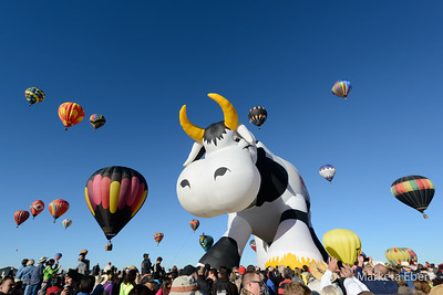 The cow was one of the most popular special shapes
